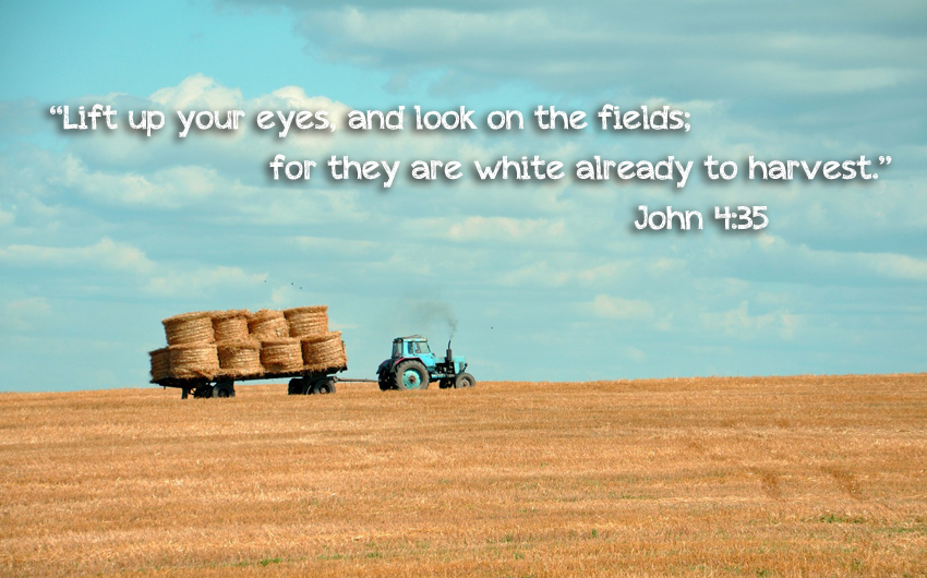 harvest, field