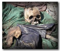 skeleton story