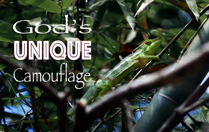 God's Unique Camouflage