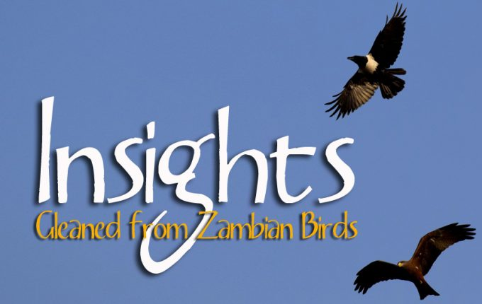 Insights Gleaned from Zambian Birds