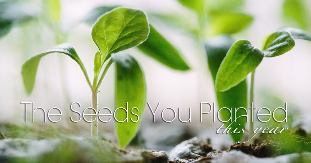 The Seeds You Planted This Year – A Christmas Greeting from Lazarus Yezinai