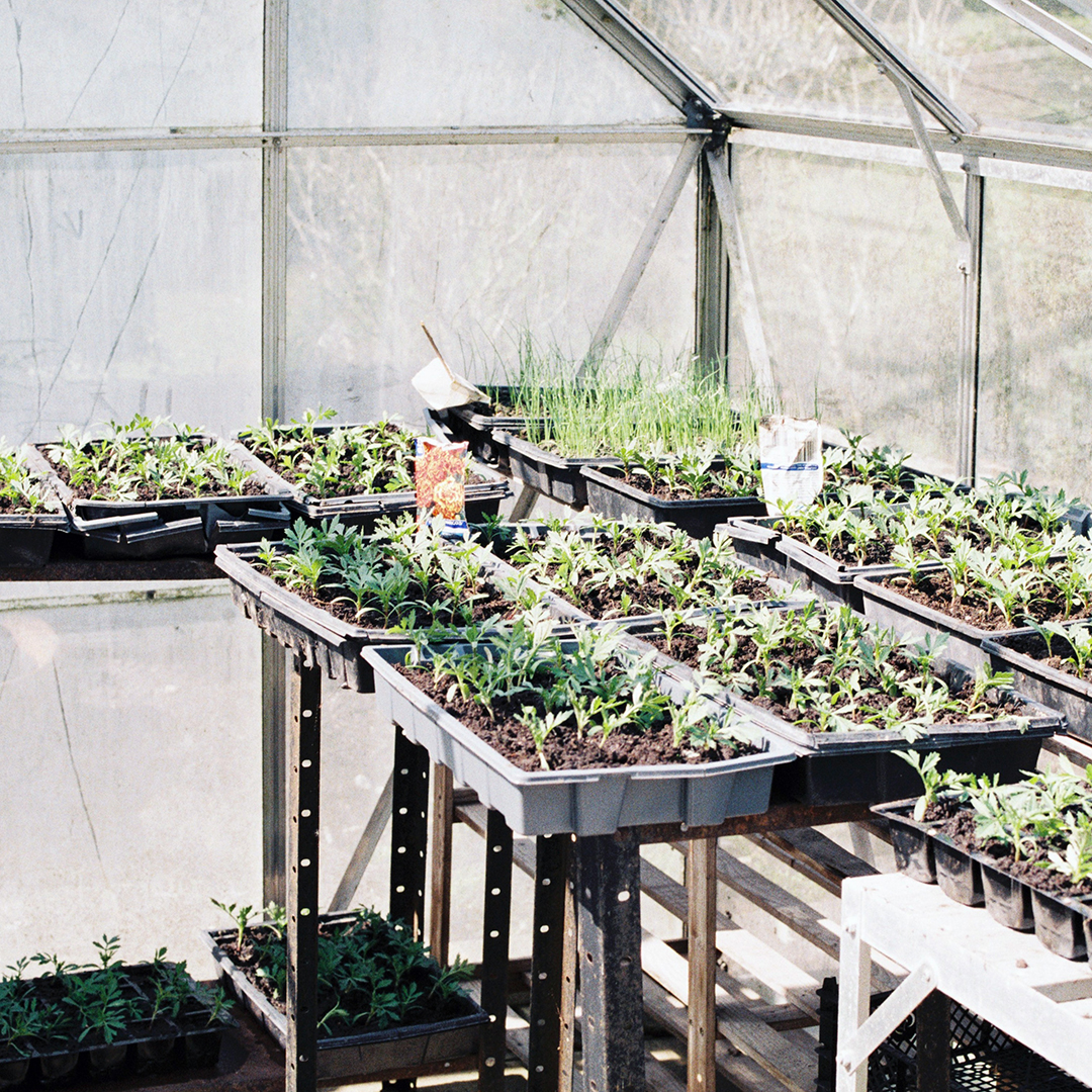 Greenhouse that Feeds the Hungry, 2019 catalog